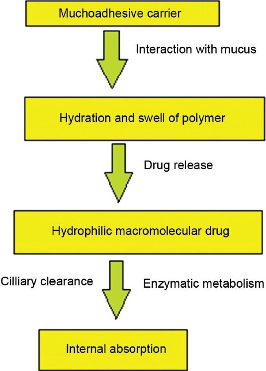 a review on mucoadhesive polymer used in nasal drug delivery system