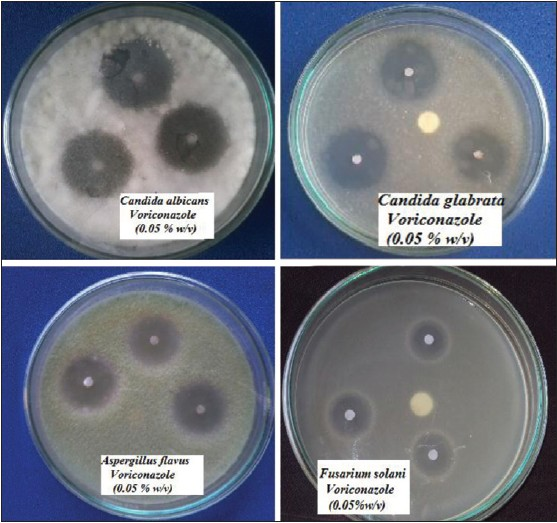 thesis on candida albicans
