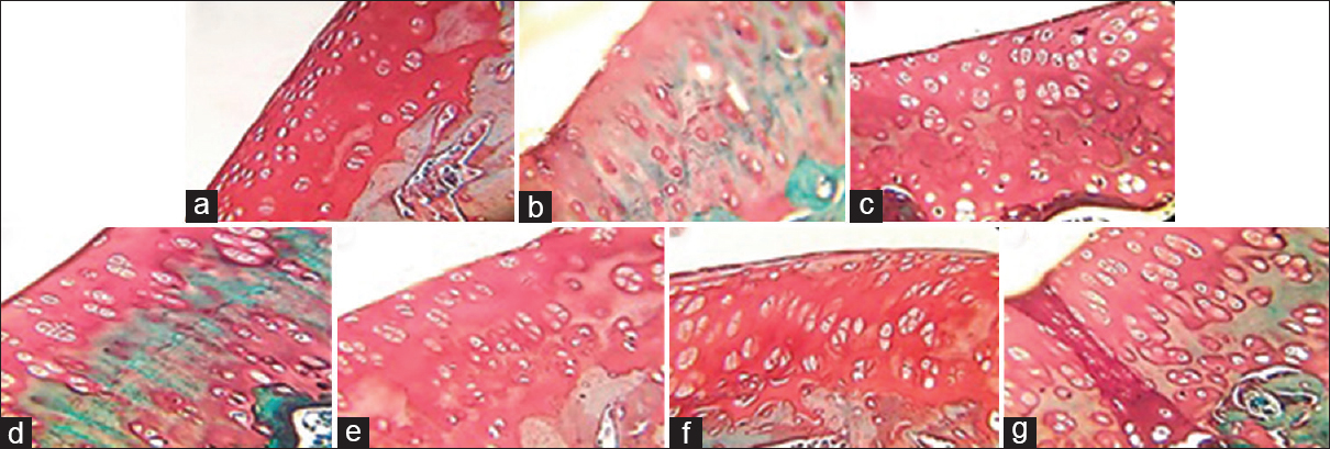 Figure 1: Knee joint histology of destabilization of medial meniscus model rat with Safranin O/fast green staining. (a) SHAM; (b) negative control; (c) positive control; (d) quercetin-loaded nanoparticle gel dose 1; (e) dose 2; (f): dose 3; (g) <i>Ageratum conyzoides</i> gel